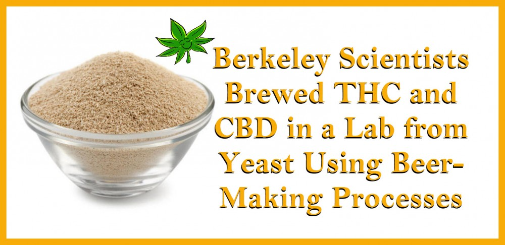 thc and cbd from yeast