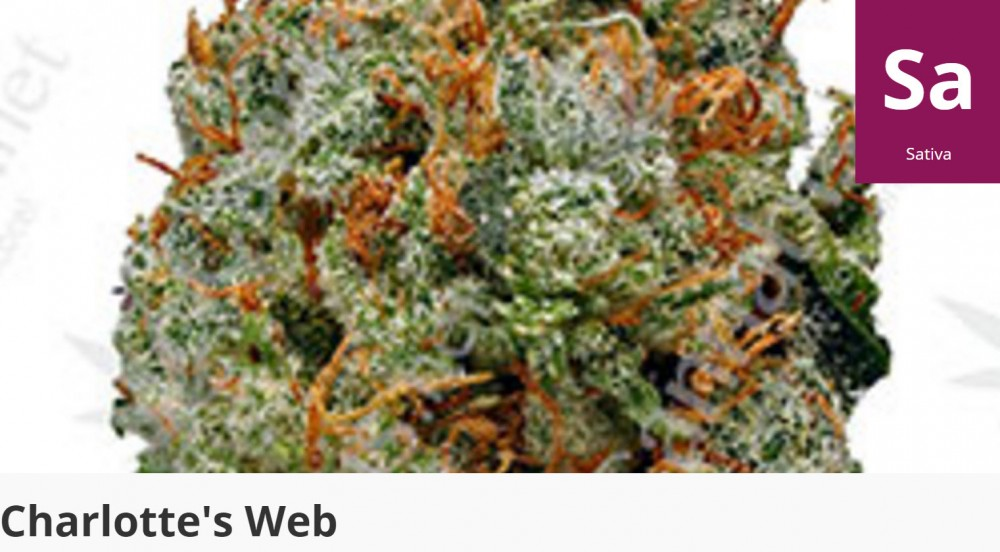charollete web cannabis