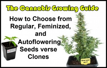 HOW TO PICK OUT CANNABIS SEEDS