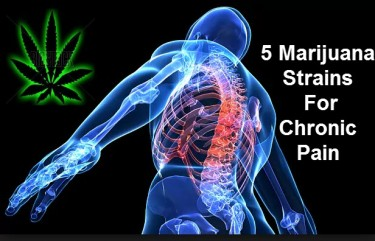 CANNABIS STRAINS FOR CHRONIC PAIN