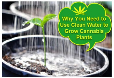 CLEAN WATER FOR MARIJUANA PLANTS
