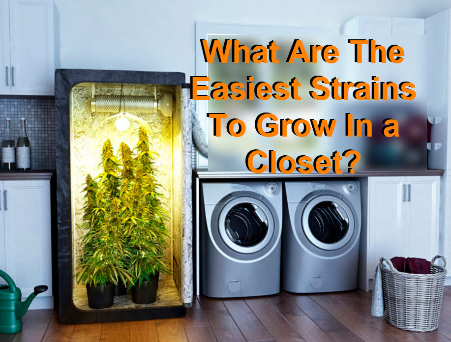 Best Cannabis Strains To Grow In A Closet