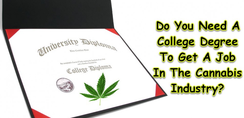 DO YOU NEED A COLLEGE DEGREE TO WORK IN CANNABIS