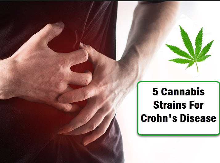 marijuana strains for crohns