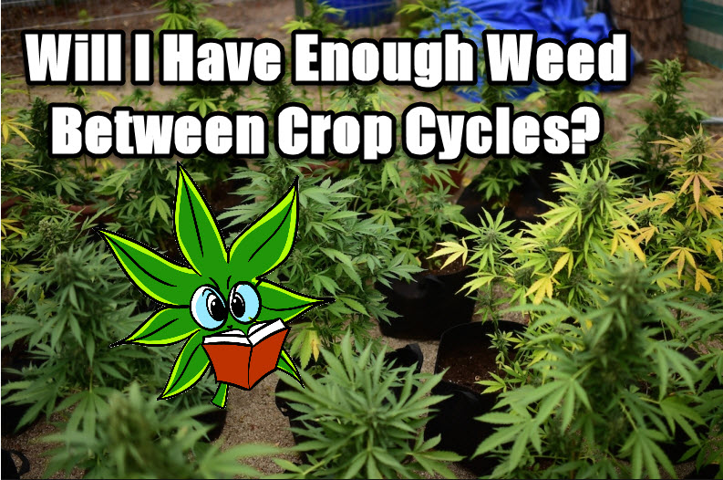 CANNABIS IN BETWEEN CROP CYCLES
