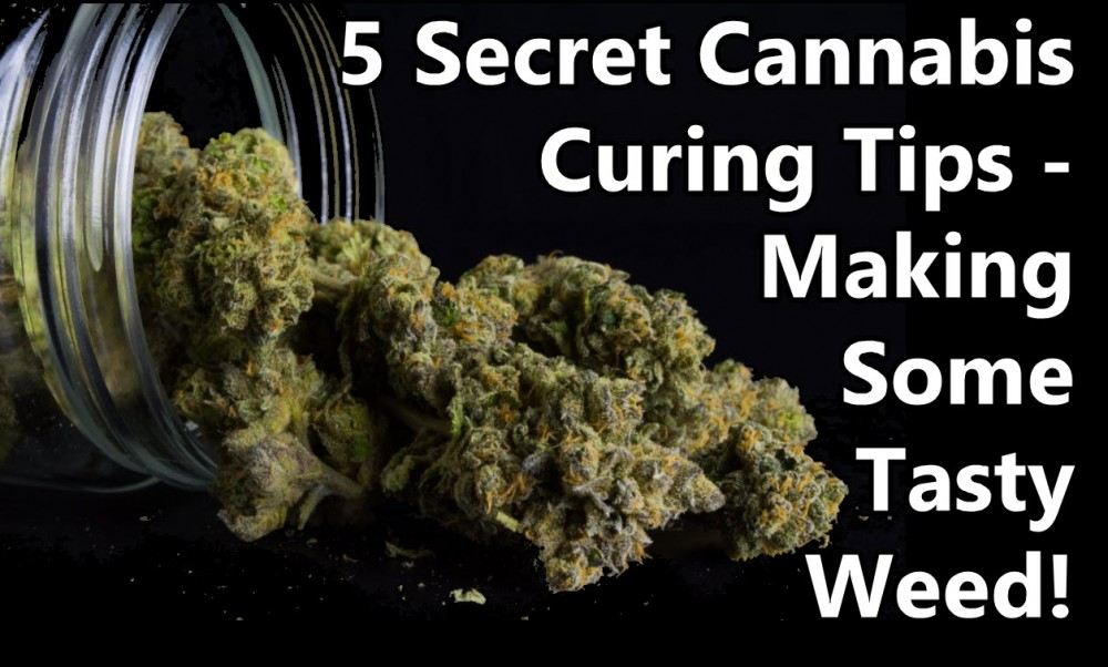 cannabis curing tips