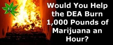 dea burning weed