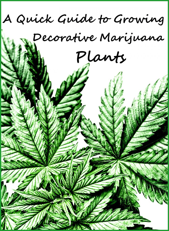 decorative cannabis plants