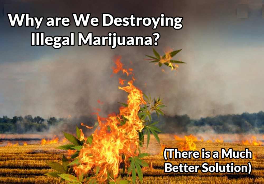 destoryingweed - Cannabis and the California Wildfires