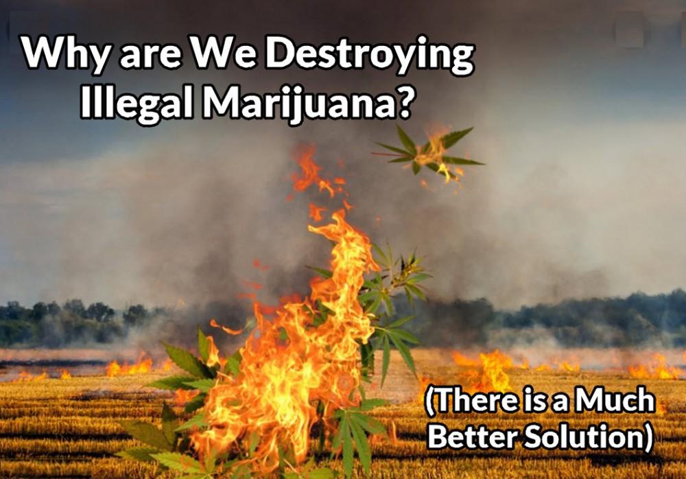 why destroy illegal marijuana