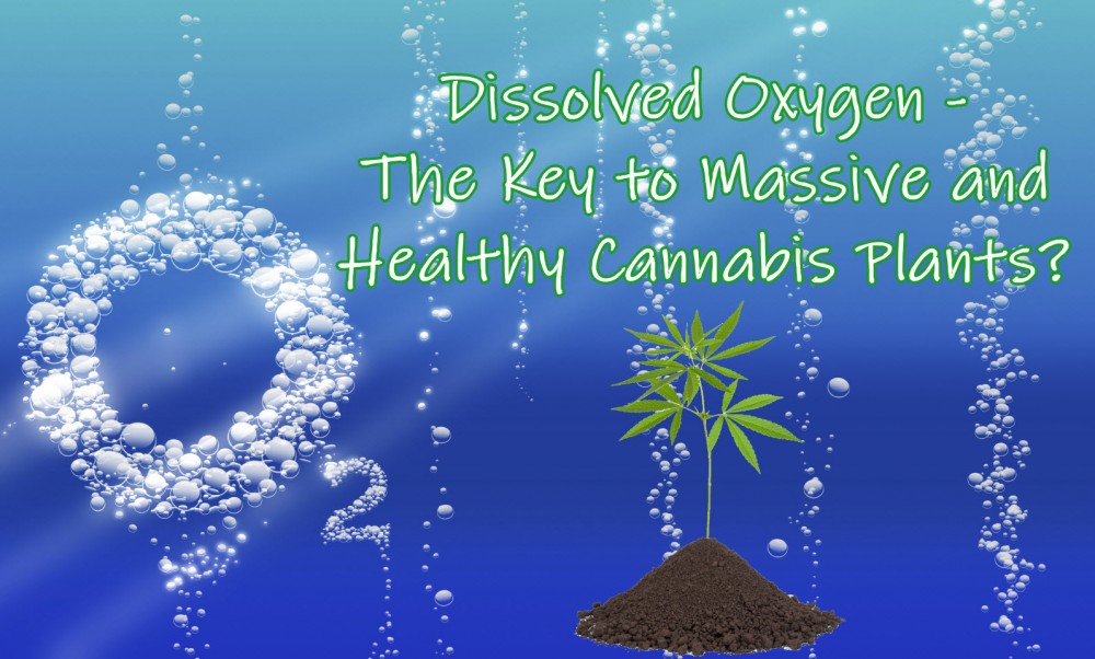 dissolvedoxygencannabis - Dissolved Oxygen - The Key to Massive and Healthy Cannabis Plants?
