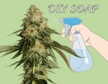 diy soap for marijuana plants