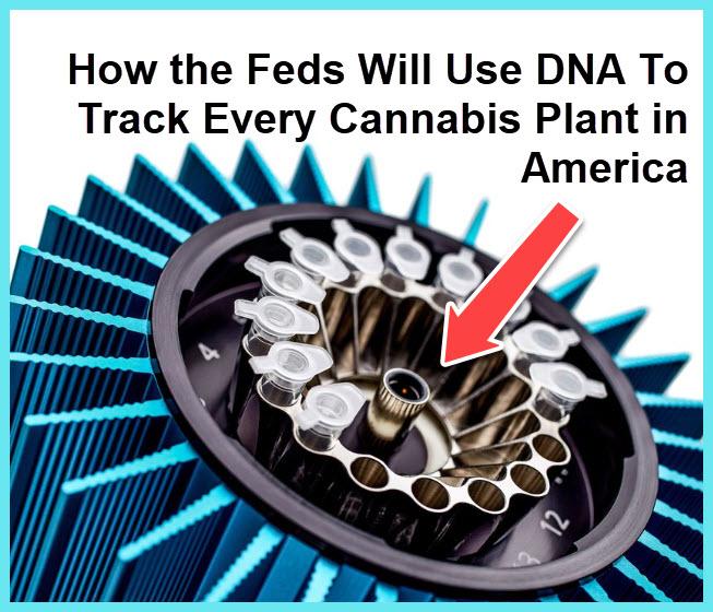 dna marijuana plants