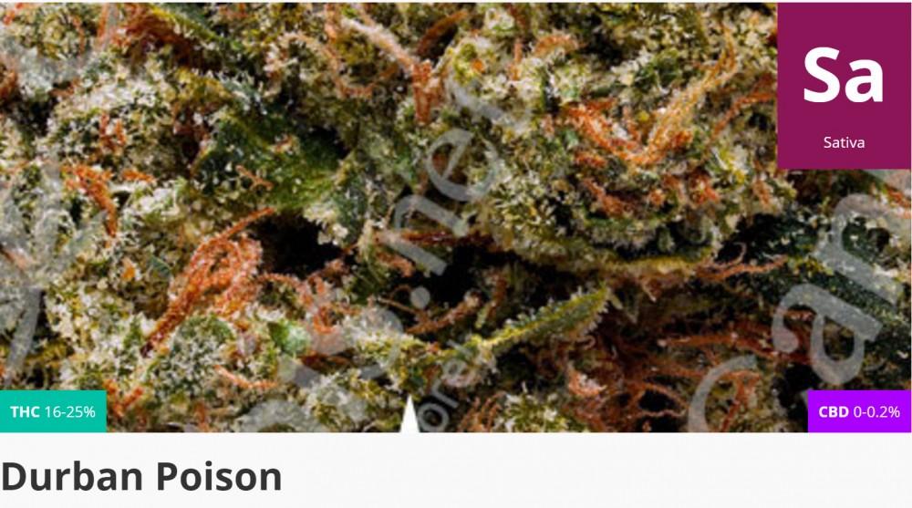 durbin poison cannabis