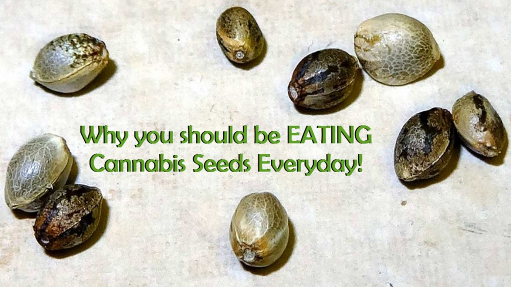 EAT CANNABIS SEEDS HEALTHY