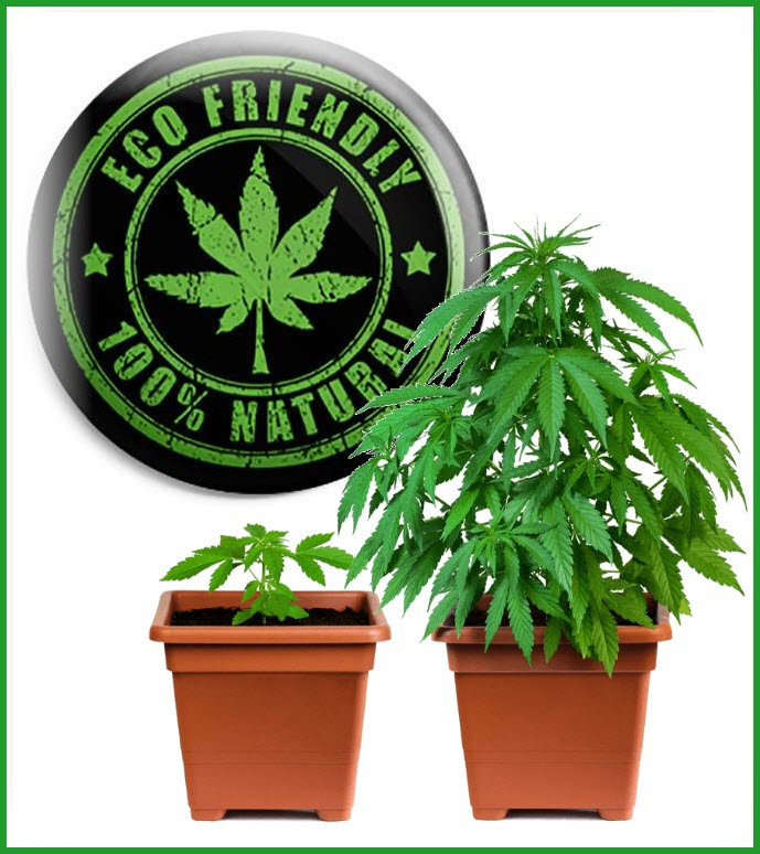 ecofriendlycannabis   Copy 1 - How the Cannabis Industry Can be More Eco-Friendly Going Forward