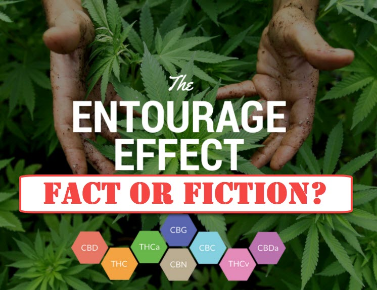 WHAT IS THE MARIJUANA ENTOURAGE EFFECT