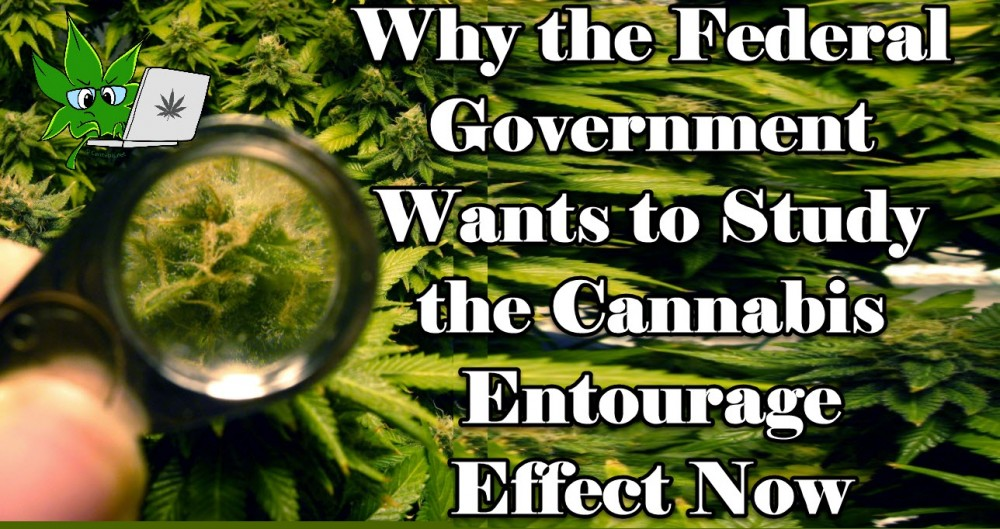 entourage effect government