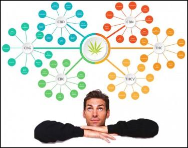 entourage effect in cannabis