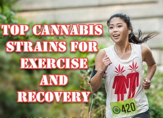 CANNABIS STRAINS FOR EXERCISE AND WORKING OUT
