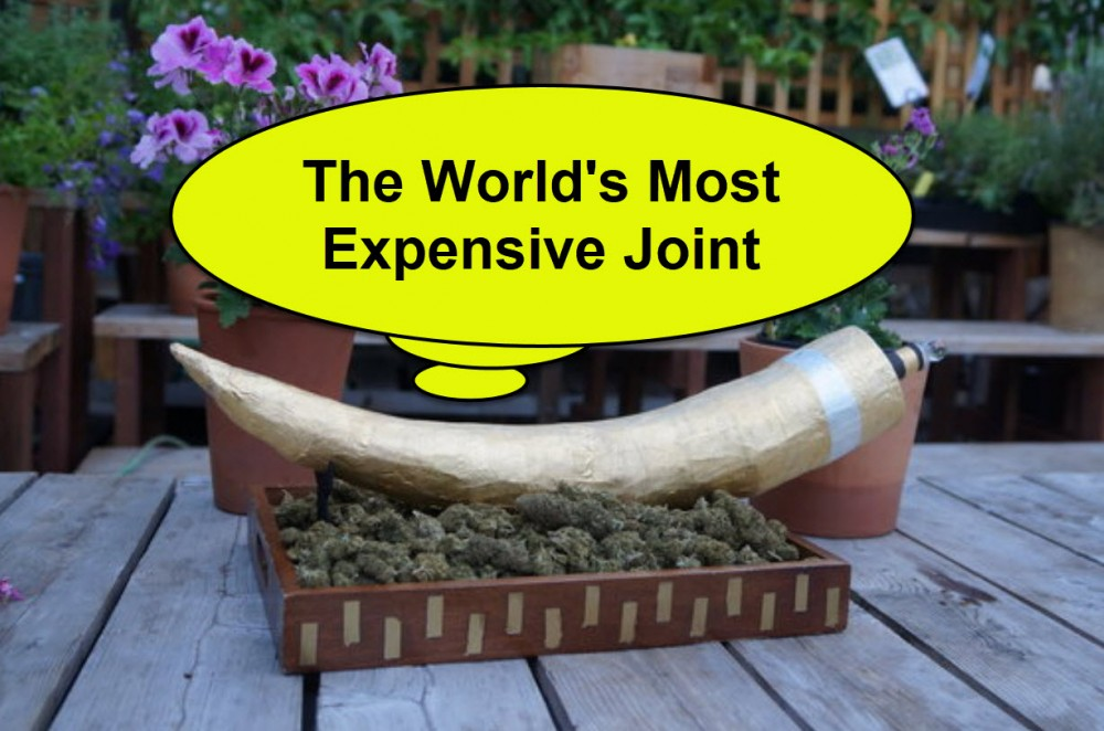 EXPENSIVE JOINTS OF GOLD CANNABIS