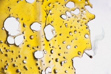 cannabis extraction business