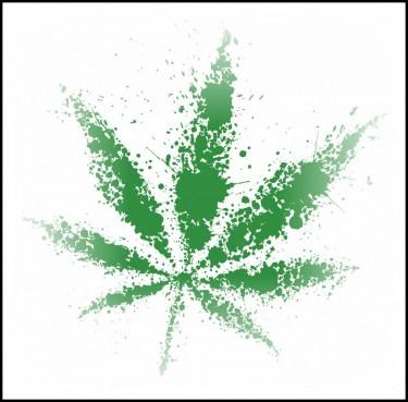 fading marijuana plants