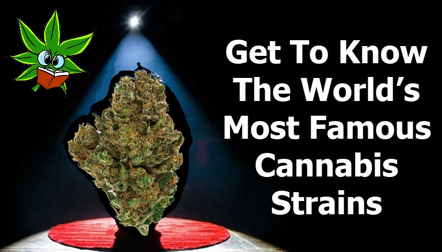 famous cannabis strains or marijuana strains