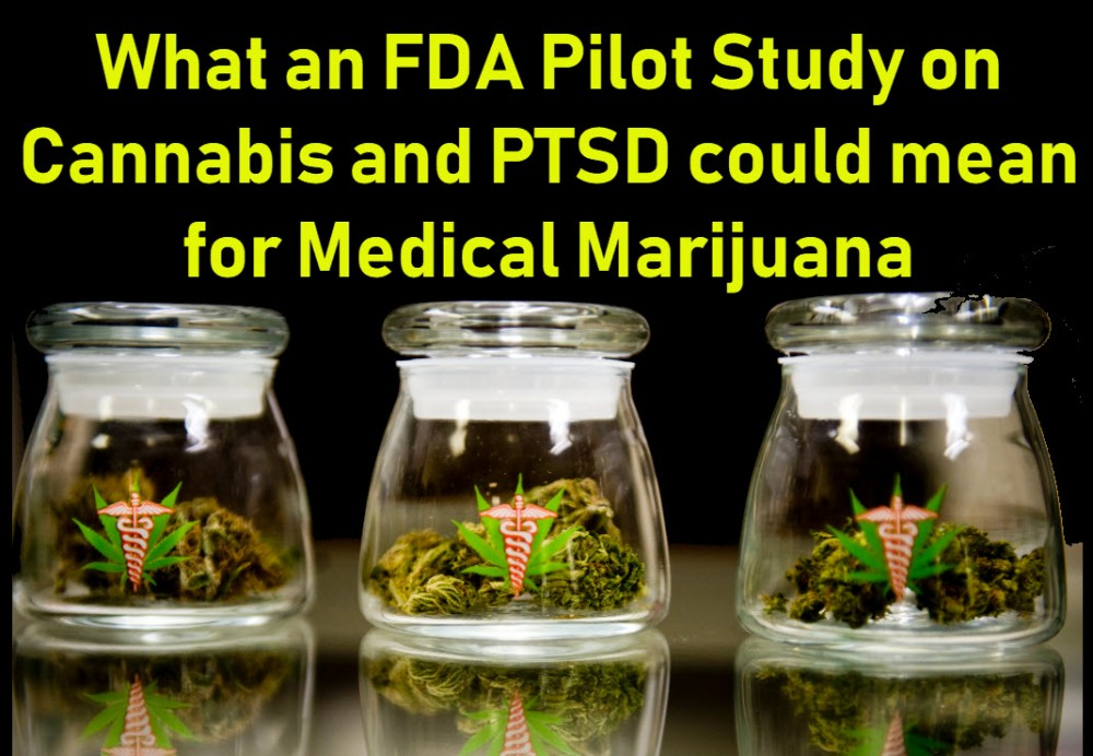 ptsd and cannabis and the MAPS study