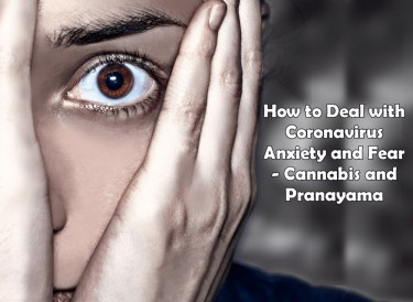 FEAR AND ANXIETY OVER COVID AND MARIJUANA