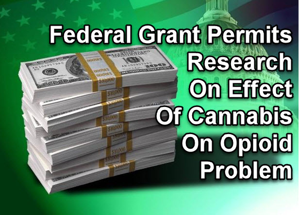 FEDERAL GRANT FOR CANANBIS OPIATE RESEARCH