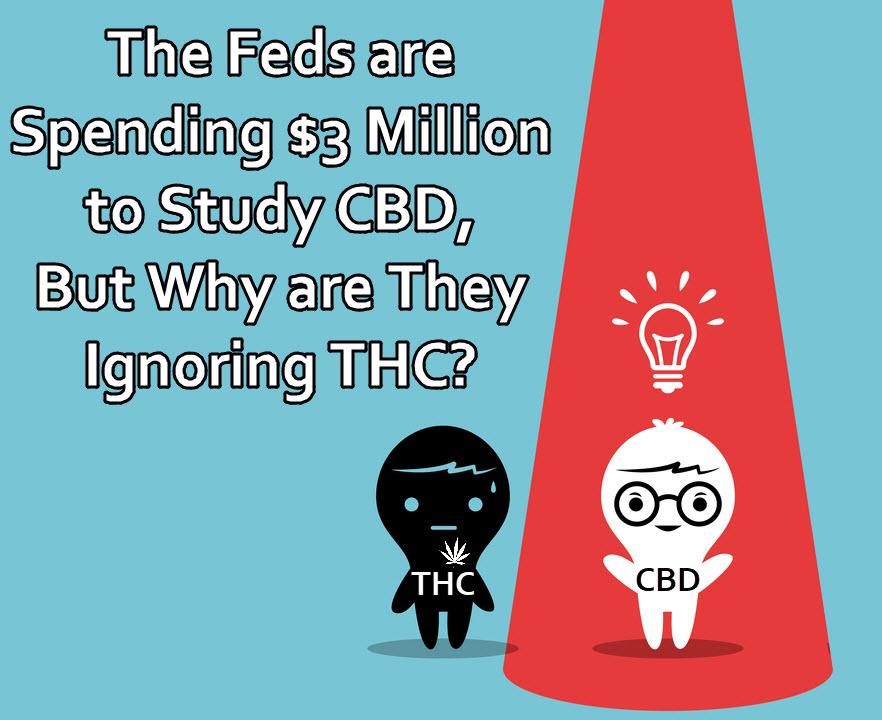 Feds study CBD