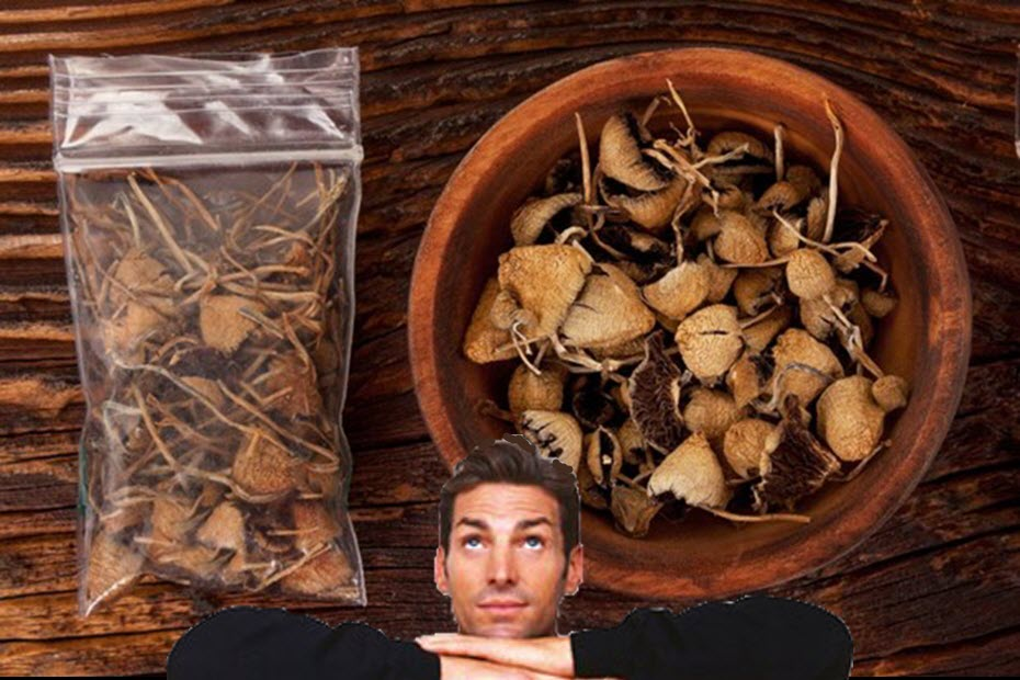 firsttimemagicmushrooms - Things You Should Know Before Trying Magic Mushrooms for the First Time