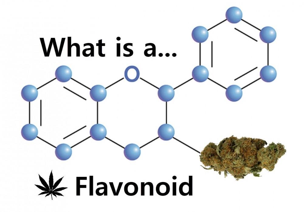 marijuana flavonoids