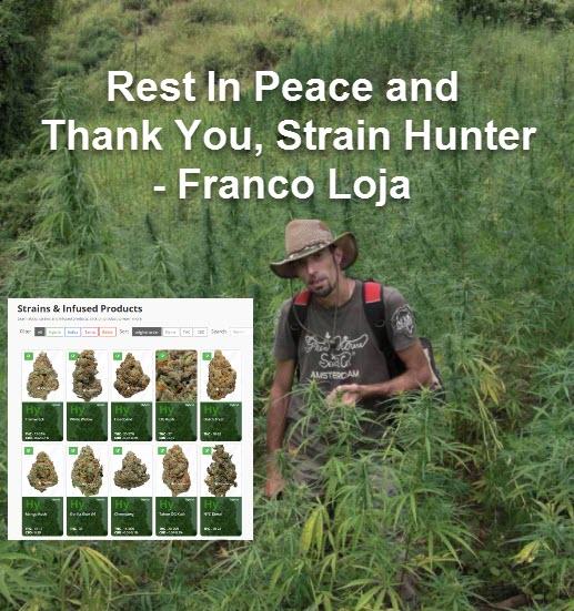 franco loja strain hunter