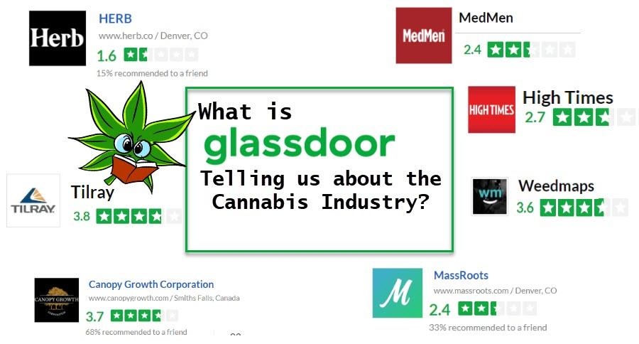cannabis jobs on glassdoor