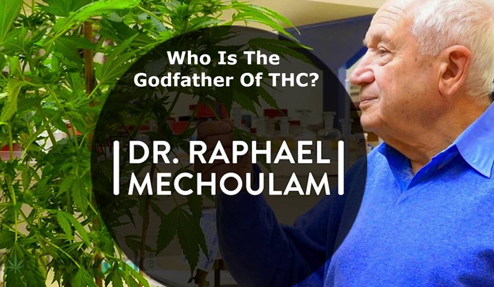 DR. MECHOULAM GODFATHER OF THC