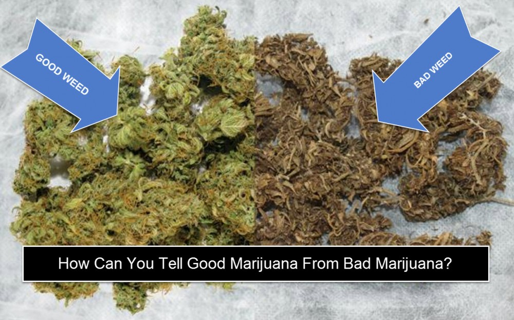 HOW CAN YOU TELL GOOD MARIJUANA FROM BAD MARIJUANA