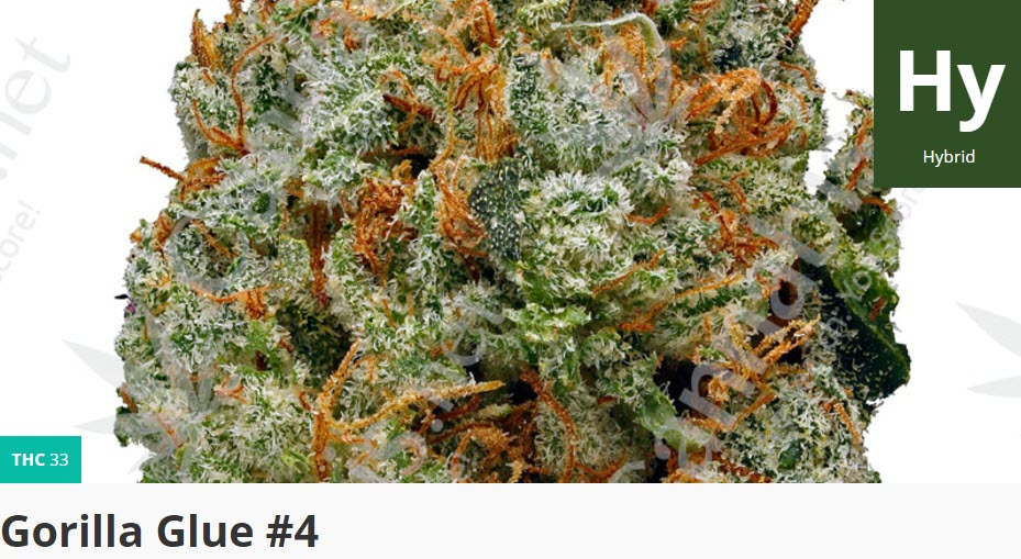gorilla glue 4 cannabis