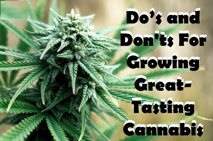 tips for great tasting weed