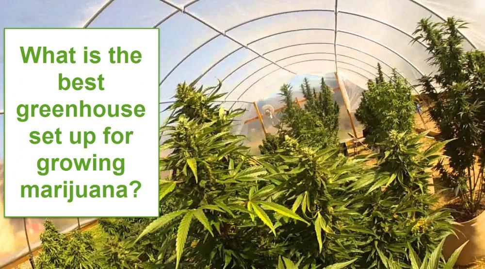 greenhouse for marijuana