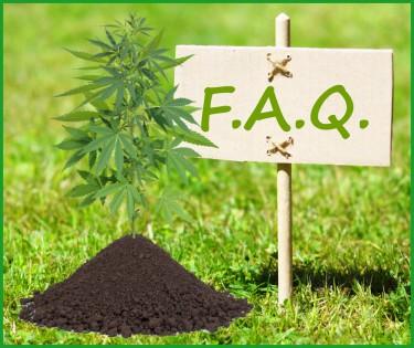 growing weed faq