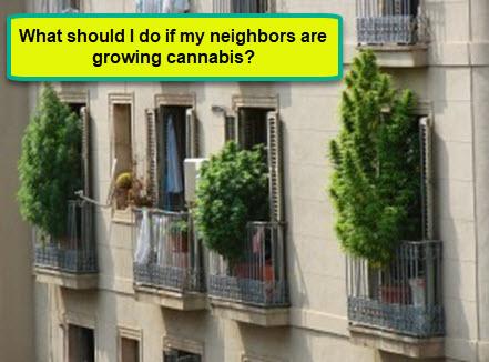 WHAT IF YOU NEIGHBOR IS GROWING WEED