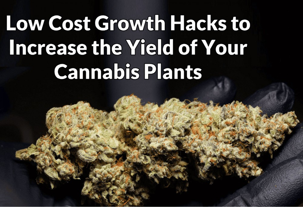 growth hacking cannabis