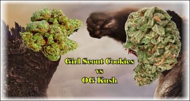 girl scout cookies vs. OG Kush