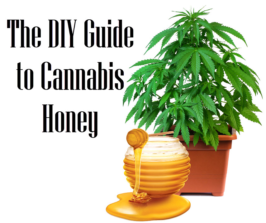 guidetocannabishoney - Honey in Your Cannabis Cultivation: A Guarantee of Maximum Yield?