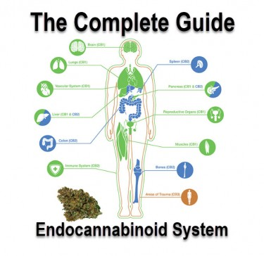 GUIDE TO ENDOCANNABINOIDS