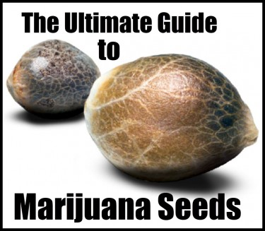 GUIDE TO MARIJUANA SEEDS AND SUPPLIERS