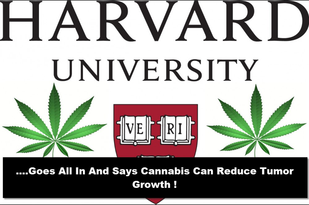 HARVARD MEDICAL CANNABIS STUDY