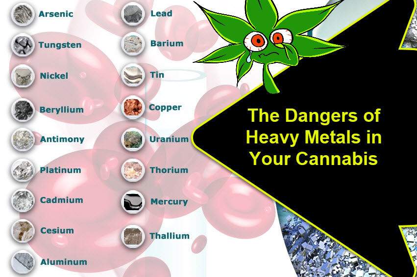 HEAVY METALS IN CANNABIS